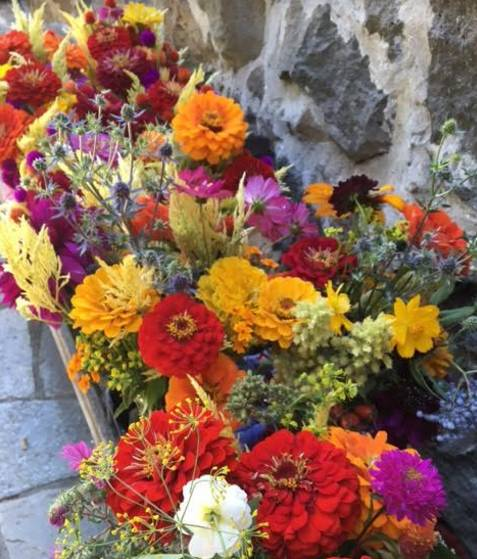 Ready for market: pint bouquets of vibrant zinnias and celosia