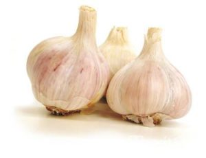 music-garlic